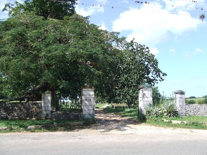 minard estate and new hope st ann jamaica photographs
